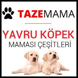 Pro Plan Puppy Sensitive Skin Digestion Kuzu Etli ve Pirinçli Yavru Köpek Maması